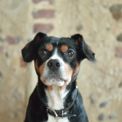 Fergus Site Dog