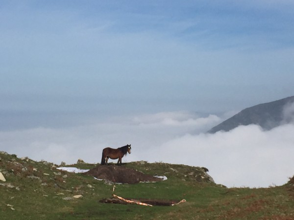 Chavella - Horse Above the Clouds